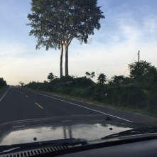 Road to Gulu - Two Trees